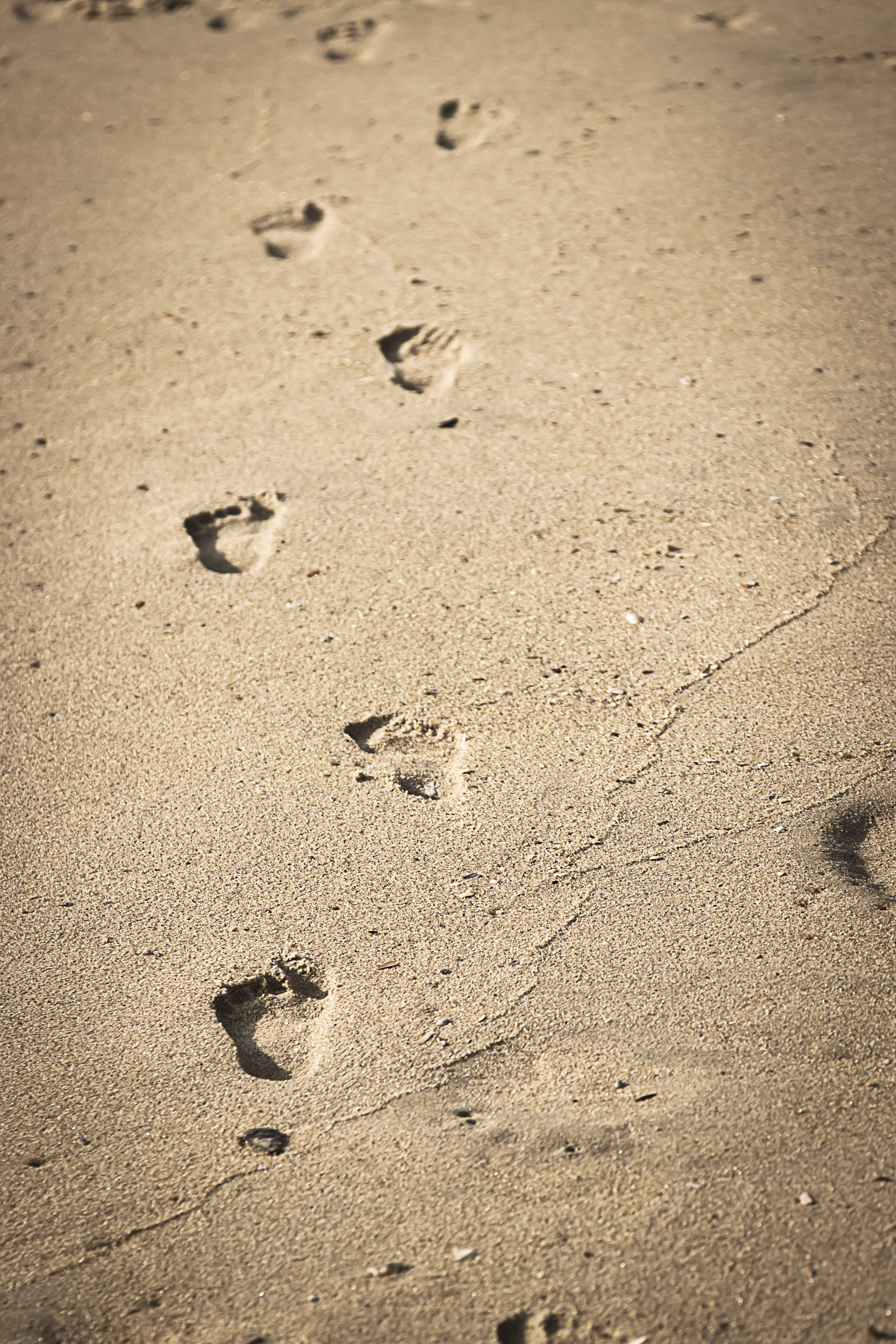 Footprints In The Sand Kelly Marie Photography