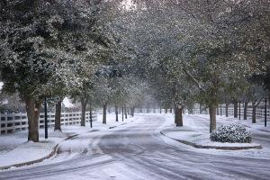 Snowy Day_0009