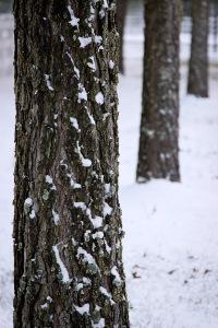 Snowy Day_0012