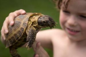 Goodbye Turtle_0009